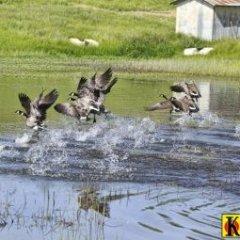 Kirkland Ranch